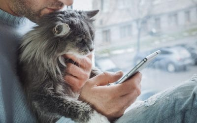 Everything Veterinary Hospitals Need to Know About Telemedicine